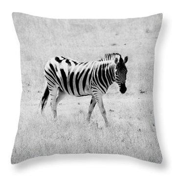 Zebra Explorer Throw Pillow by Melanie Lankford Photography