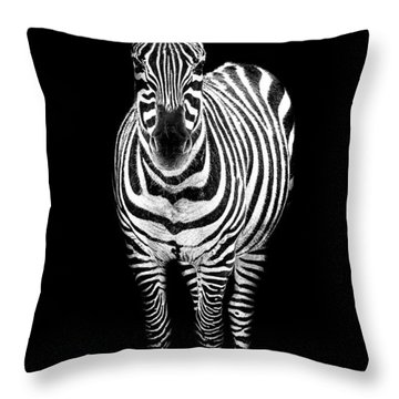 Zebra Throw Pillow by Paul Neville