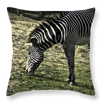 Zebra Striped Fourlegger Throw Pillow by LeeAnn McLaneGoetz McLaneGoetzStudioLLCcom