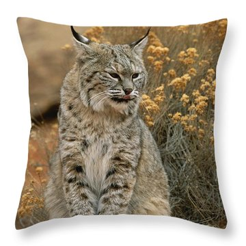 A Bobcat Throw Pillow by Norbert Rosing