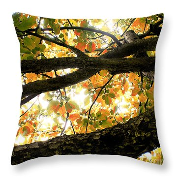Beneath The Autumn Wolf River Apple Tree Throw Pillow by Angie Rea