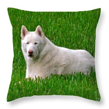 Connor Throw Pillow by Carol  Bradley