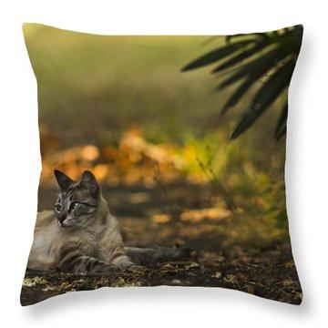 Evening Glow Throw Pillow by Kim Henderson