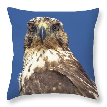 Galapagos Hawk Buteo Galapagoensis Throw Pillow by Tui De Roy