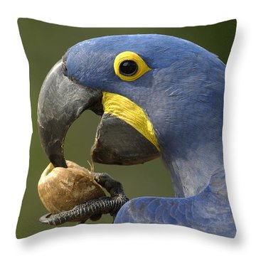 Hyacinth Macaw Anodorhynchus Throw Pillow by Pete Oxford