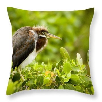 Juvenile Tricolored Heron Egretta Throw Pillow by Tim Laman