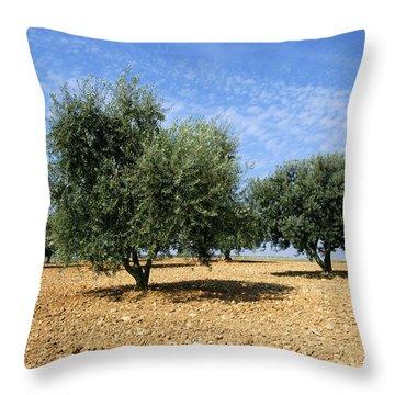 Olives Tree In Provence Throw Pillow by Bernard Jaubert