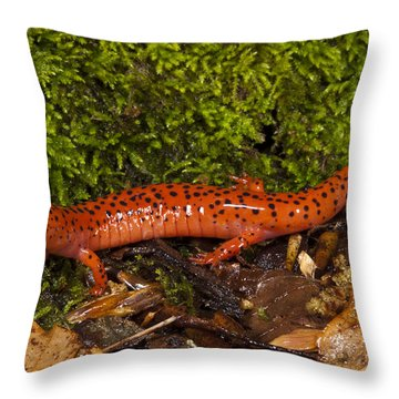 Red Salamander Pseudotriton Ruber Throw Pillow by Pete Oxford