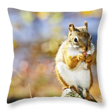 Red Squirrel Throw Pillow by Elena Elisseeva