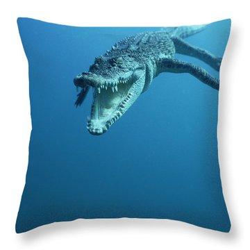 Saltwater Crocodile Crocodylus Porosus Throw Pillow by Mike Parry