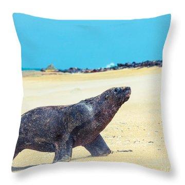 Sea Lion Throw Pillow by MotHaiBaPhoto Prints