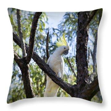 Sulphur Crested Cockatoo Throw Pillow by Douglas Barnard