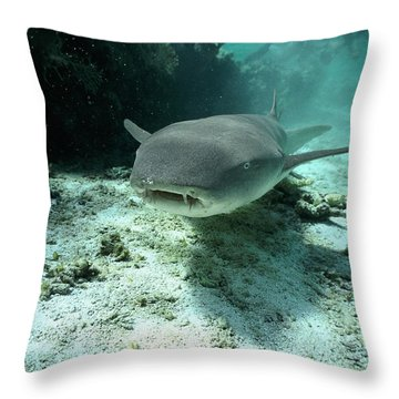 Tawny Nurse Shark Nebrius Ferrugineus Throw Pillow by Mike Parry