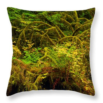 Temperate Rain Forest Throw Pillow by Adam Jewell