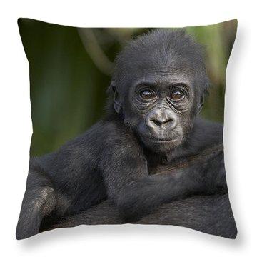 Western Lowland Gorilla Gorilla Gorilla Throw Pillow by San Diego Zoo