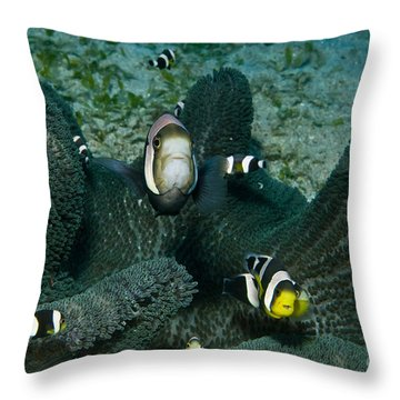 Whole Family Of Clownfish In Dark Grey Throw Pillow by Mathieu Meur