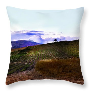 Wine Vineyard In Sicily Throw Pillow by Madeline Ellis
