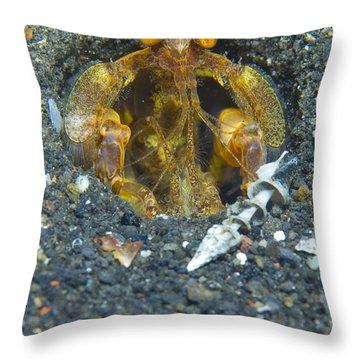 Orange Mantis Shrimp In Its Burrow Throw Pillow by Steve Jones