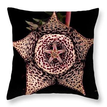 Stapelia Flower Throw Pillow by Dant� Fenolio