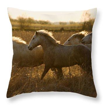 Camargue Horse Equus Caballus Group Throw Pillow by Konrad Wothe