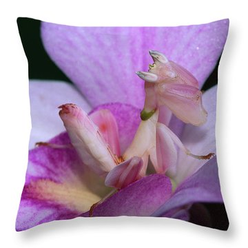 Orchid Mantis Hymenopus Coronatus Throw Pillow by Thomas Marent