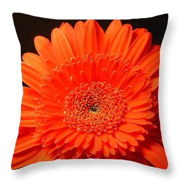 3291 Throw Pillow by Kimberlie Gerner