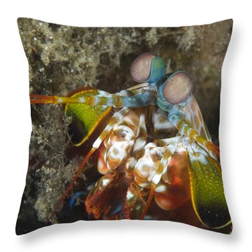 Close-up View Of A Mantis Shrimp, Papua Throw Pillow by Steve Jones