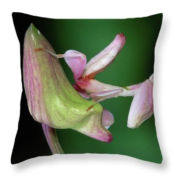 Orchid Mantis Hymenopus Coronatus Throw Pillow by Thomas Marent