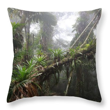 Bromeliad Bromeliaceae And Tree Fern Throw Pillow by Cyril Ruoso