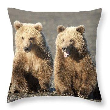 Grizzly Bear Ursus Arctos Horribilis Throw Pillow by Matthias Breiter