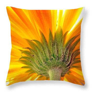 6008c Throw Pillow by Kimberlie Gerner