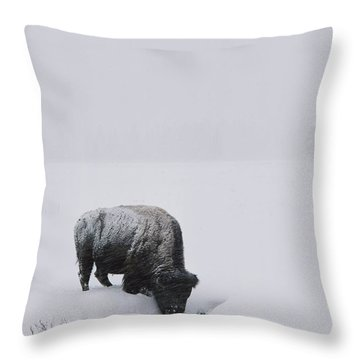 A American Bison Bison Bison Finds Throw Pillow by Tom Murphy