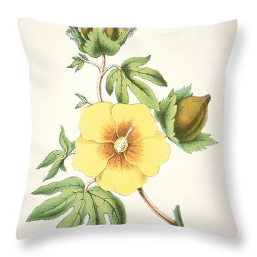 A Cotton Plant Throw Pillow by American School