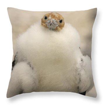 A Juvenile Great Frigatebird, Fregata Throw Pillow by Ralph Lee Hopkins