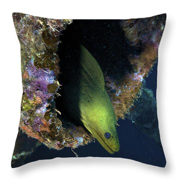 A Large Green Moray Eel Throw Pillow by Terry Moore