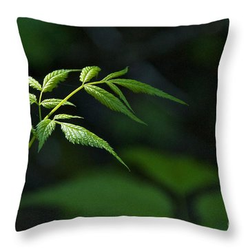A Light In The Forest Throw Pillow by Sean Griffin
