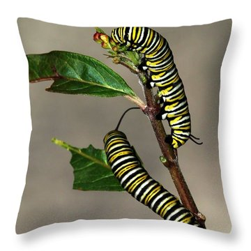A Pair Of Monarch Caterpillars Throw Pillow by Sabrina L Ryan