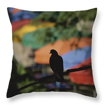 A Silhouetted Pigeon Surveys Throw Pillow by Stephen St. John