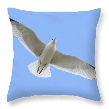 A Soaring Dove Throw Pillow by Don Hammond