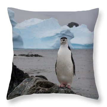 A Solitary Chinstrap Penguin Stands Throw Pillow by Paul Nicklen