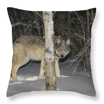 A Timber Wolf Peers From Behind A Tree Throw Pillow by Paul Nicklen