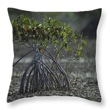 A Young Mangrove Tree Throw Pillow by Klaus Nigge