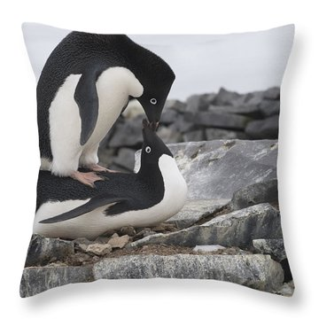 Adelie Penguins Mating  Antarctica Throw Pillow by Flip Nicklin