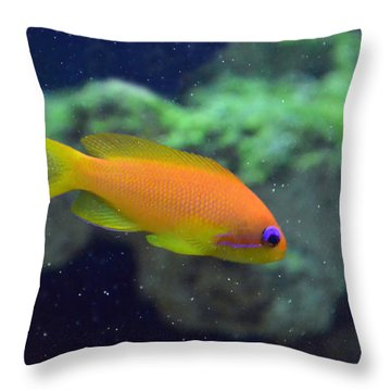 African Anthias Throw Pillow by Sandi OReilly