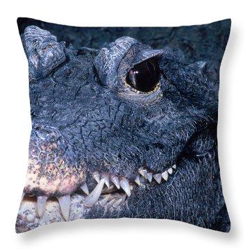 African Dwarf Crocodile Throw Pillow by Dante Fenolio