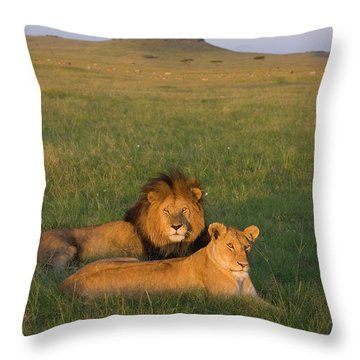 African Lion Panthera Leo Male Throw Pillow by Suzi Eszterhas