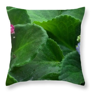 African Violets Intertwined II Throw Pillow by Nancy Mueller