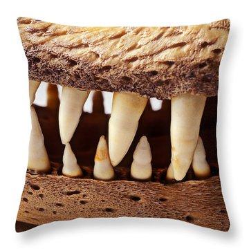 Alligator Skull Teeth Throw Pillow by Garry Gay