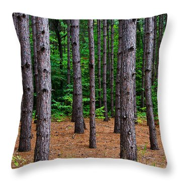 Alone Among The Pines Throw Pillow by Rachel Cohen