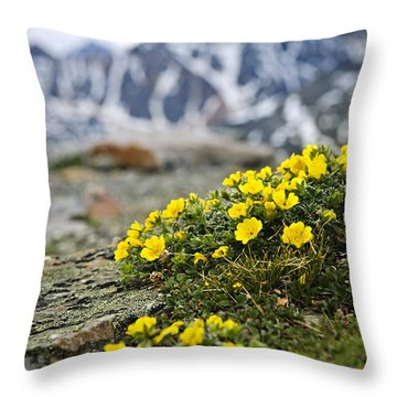 Alpine Meadow  Throw Pillow by Elena Elisseeva